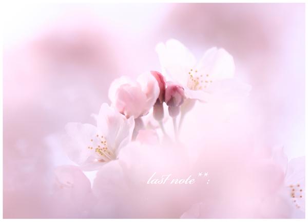 _MG_0796a.jpg