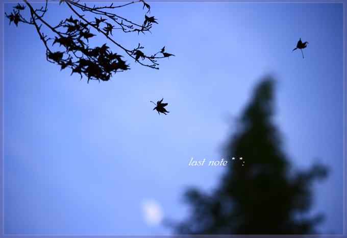 _MG_5623.jpg